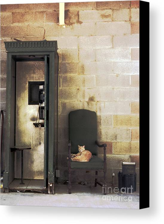 Cat Canvas Print featuring the photograph Call Waiting by Lawrence Costales