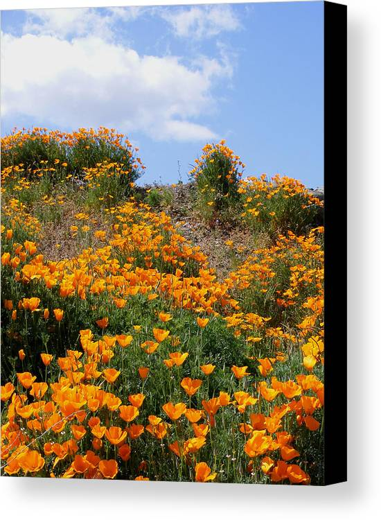 Canvas Print featuring the photograph Clouds Over Poppies by Gail Salitui