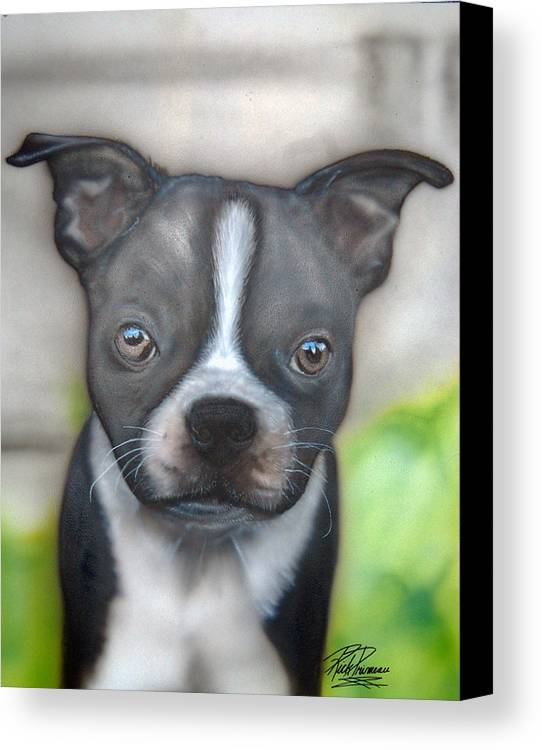 Boston Terrier Canvas Print featuring the painting Innocent Stare by Rick Primeau