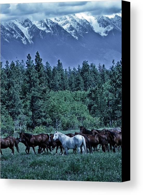 Rocky Mountains Canvas Print featuring the photograph Moody Mountains by Eleszabeth McNeel