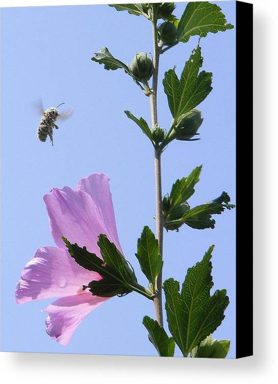 Landscape Canvas Print featuring the photograph Pollen Nation by Ed Smith