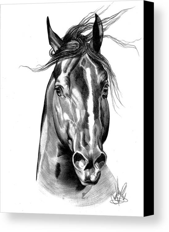 Horse Art Canvas Print featuring the drawing Quarter Horse Head Shot In Bic Pen by Cheryl Poland