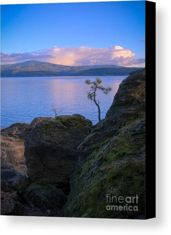 Tree Canvas Print featuring the photograph Shore Dance by Idaho Scenic Images Linda Lantzy