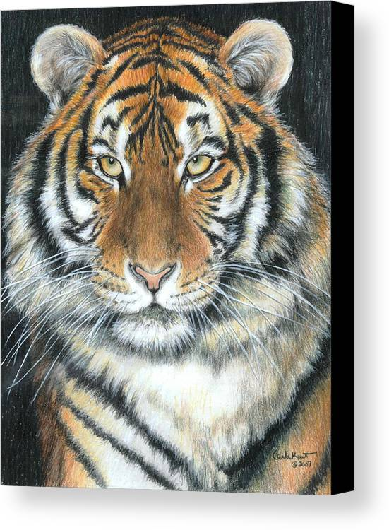 Tiger Canvas Print featuring the drawing Songha by Carla Kurt