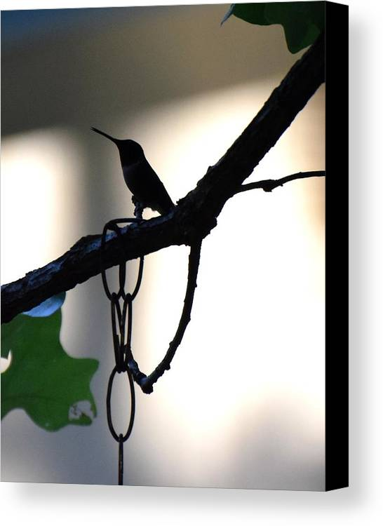 Bird Canvas Print featuring the photograph Todays Art 1245 by Lawrence Hess