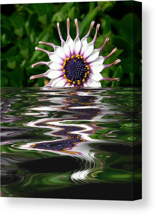 Creative Canvas Print featuring the digital art Flooded Flower by David Murphy
