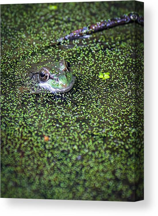 Frog Canvas Print featuring the photograph Golden Eye by Andrew Lawlor