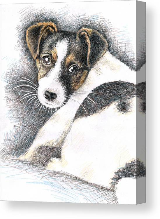 Dog Canvas Print featuring the drawing Jack Russell Puppy by Nicole Zeug