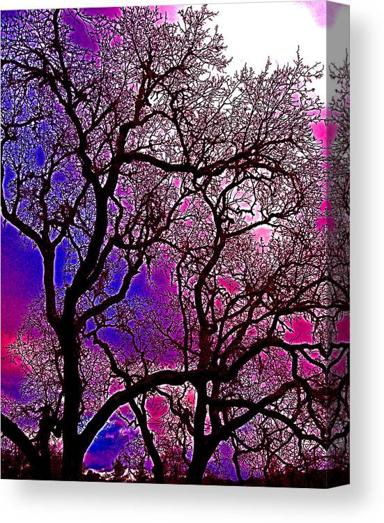 Trees Canvas Print featuring the photograph Oaks 6 by Pamela Cooper