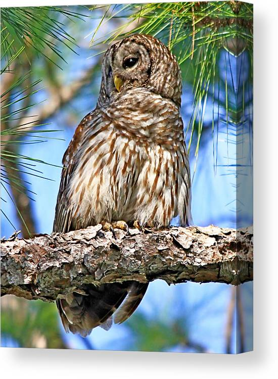 Alert Canvas Print featuring the photograph The Lookout by Ira Runyan