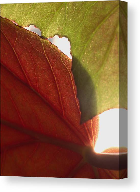 Floral Canvas Print featuring the photograph Begonia 1 by Art Ferrier