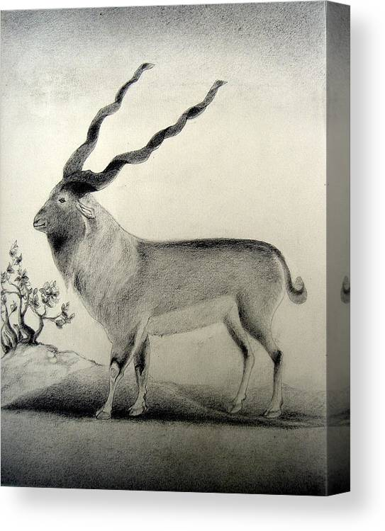 Mughal Miniature Canvas Print featuring the drawing Miniature Drawing Of Oryx by Caroline Eve Urbania