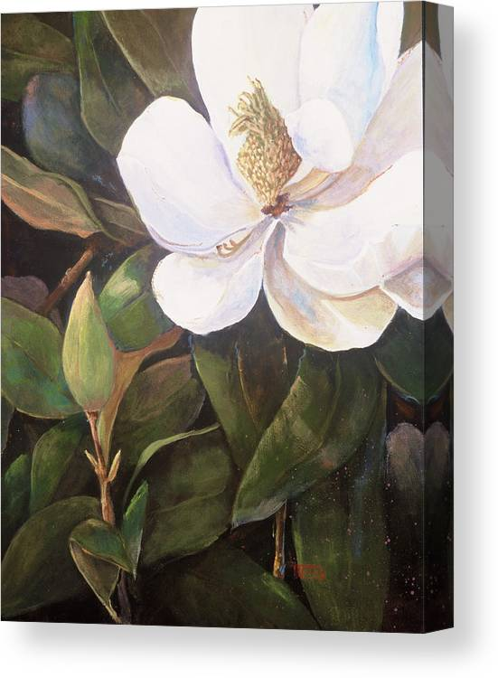 Floral Canvas Print featuring the painting Southern Magnolia by Jimmie Trotter