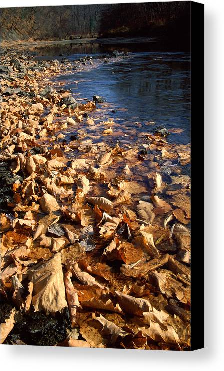 Autumn; Bank; Fall; Flora; Leaves; Nature; Nobody; Outdoors; Outside; Plant World; Plants; Seasons; Taiga; Water Canvas Print featuring the photograph Ussurian Taiga Autumn by Anonymous