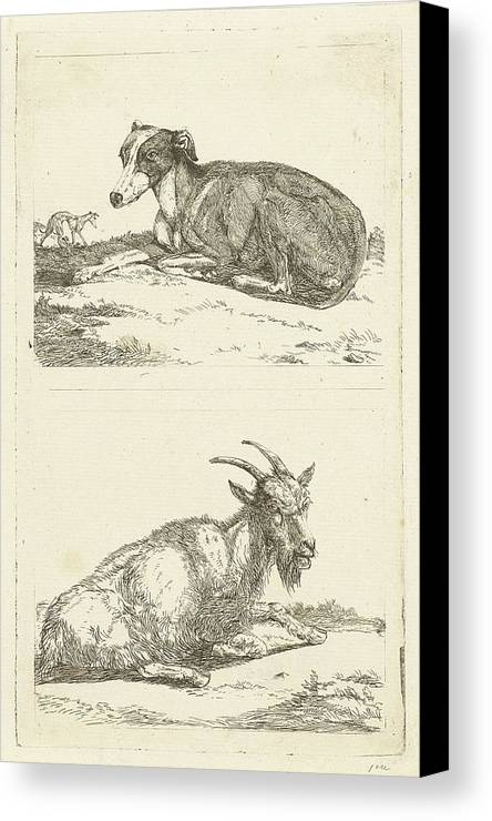 1780-1855 Canvas Print featuring the drawing Greyhounds And Goat, Jan Dasveldt by Artokoloro