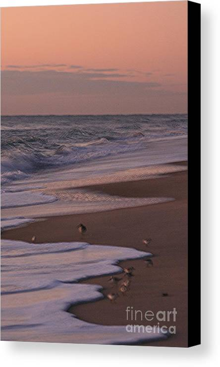 Beach Canvas Print featuring the photograph Morning Birds At The Beach by Nadine Rippelmeyer