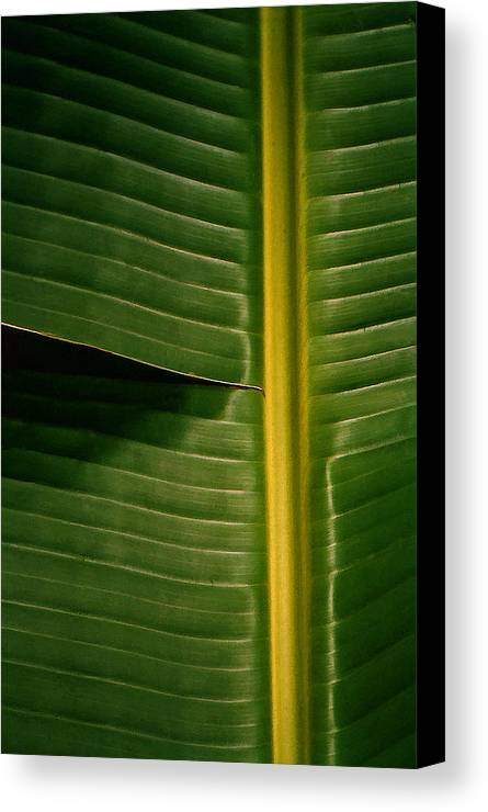Platano Canvas Print featuring the photograph Platano by Guillermo Rodriguez