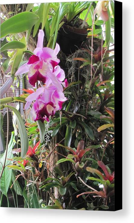 Flowers Canvas Print featuring the photograph 025 Plants by Carol McKenzie
