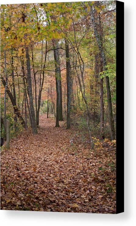 Autumn Canvas Print featuring the photograph Autumn Path by David Troxel