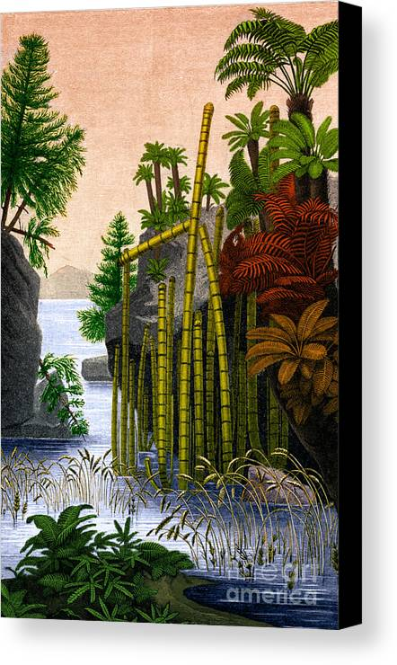 Science Canvas Print featuring the photograph Plants Of The Triassic Period by Science Source