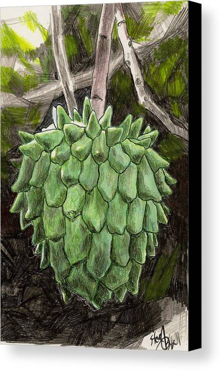 Fruit Canvas Print featuring the drawing Rollinia by Steve Asbell