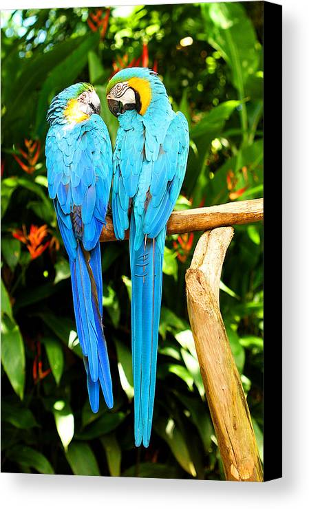 Bird Canvas Print featuring the photograph A Pair Of Parrots by Marilyn Hunt