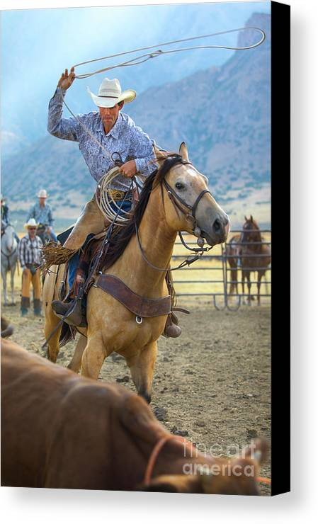 Cowboy Canvas Print featuring the photograph Cowboy Roping A Steer by Diane Diederich