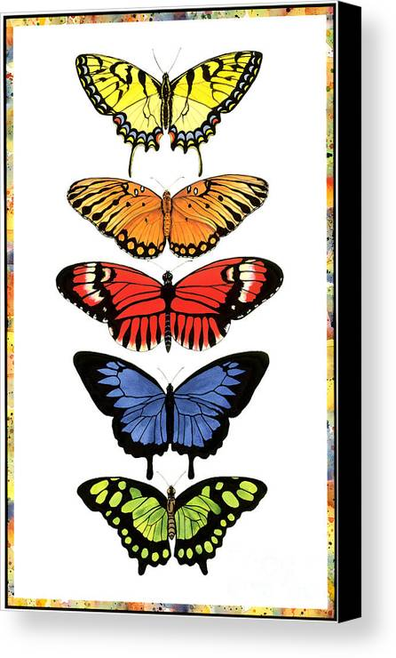 Butterflies Canvas Print featuring the painting Rainbow Butterflies by Lucy Arnold