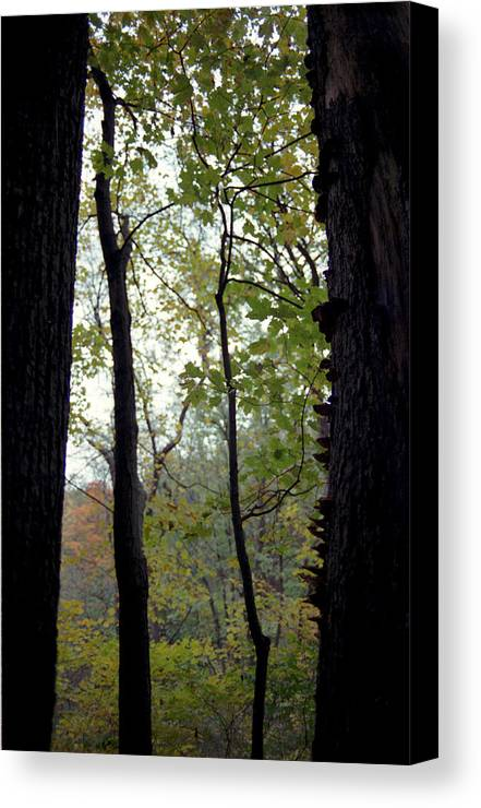Tree Canvas Print featuring the photograph Vertical Limits by Randy Oberg