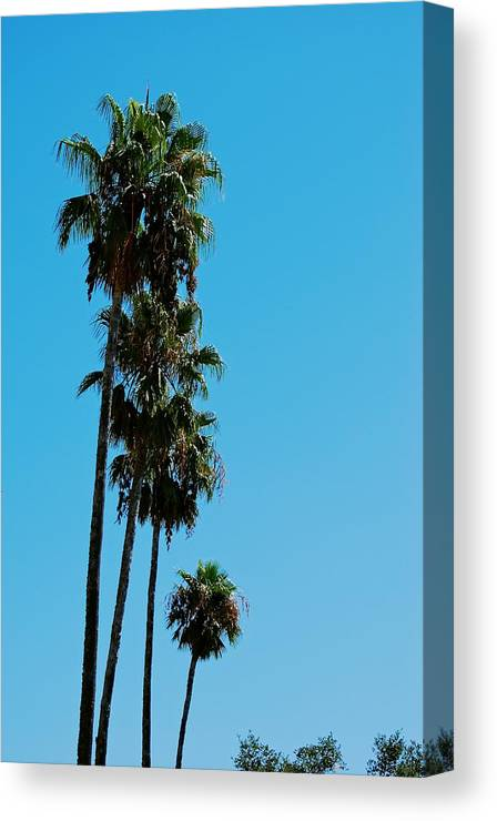 California Canvas Print featuring the photograph Palms Over Oak by Eric Tressler