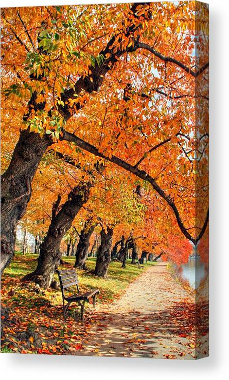 Autumn Canvas Print featuring the photograph Mute Appeal by Mitch Cat
