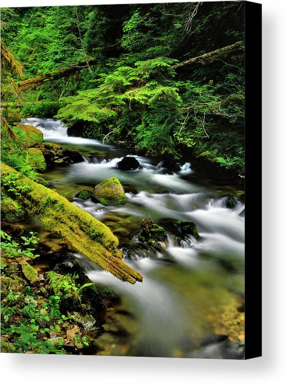 Creek Canvas Print featuring the photograph Usa, Oregon, Mt Hood National Forest by Jaynes Gallery