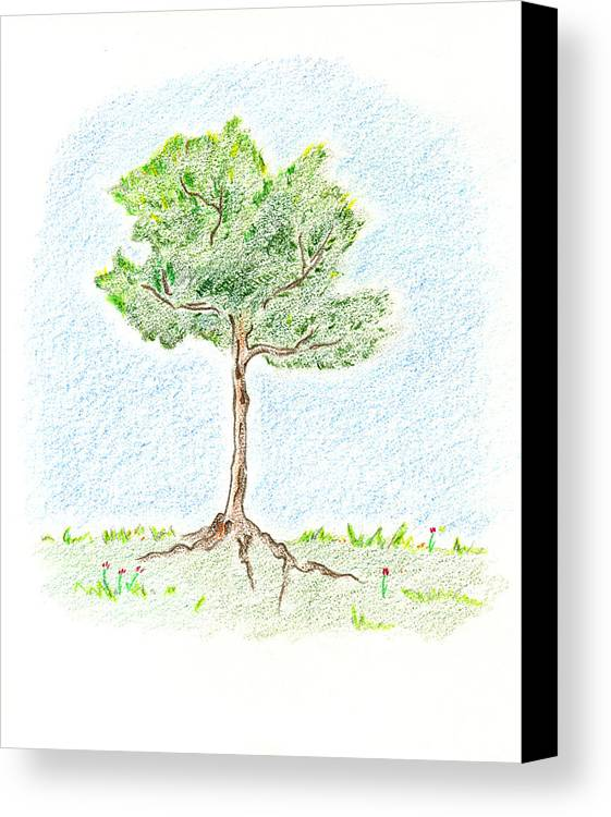 Young Tree Canvas Print featuring the drawing A Young Tree by Keiko Katsuta
