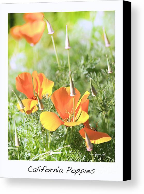 California Poppies Canvas Print featuring the photograph California Poppies by Artist and Photographer Laura Wrede