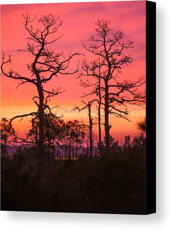 Trees Canvas Print featuring the photograph Dancing Trees Into The Fire by Paula OMalley