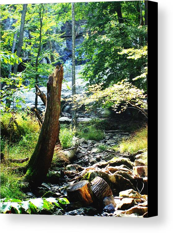 Dry Creek Canvas Print featuring the photograph Dry Creek by B Wayne Mullins