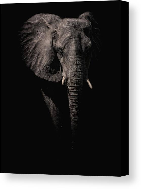 Crystal Yingling Canvas Print featuring the photograph From The Darkness by Ghostwinds Photography