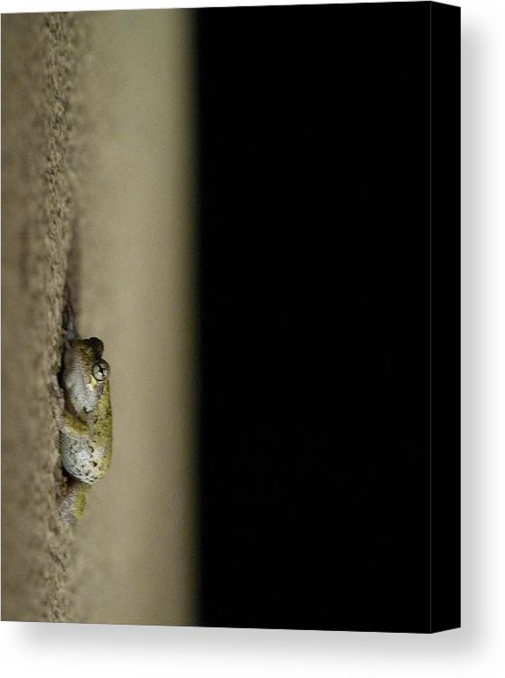 Spring Peeper Canvas Print featuring the photograph Hanging Out by Zachary Hitchcock