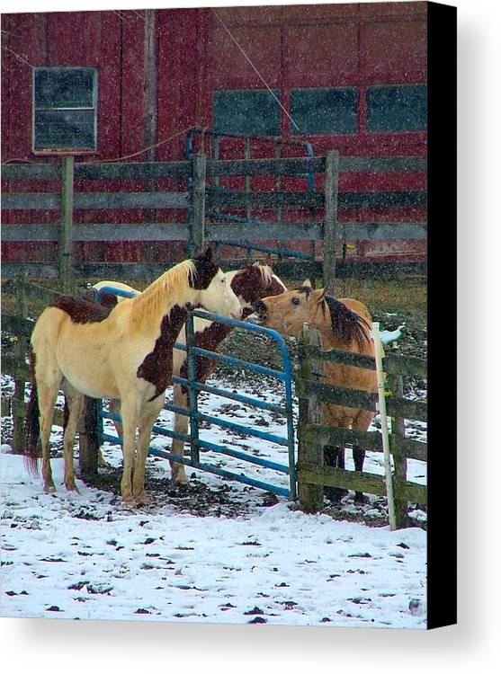 Horses Canvas Print featuring the photograph Meeting Of The Equine Minds by Julie Dant
