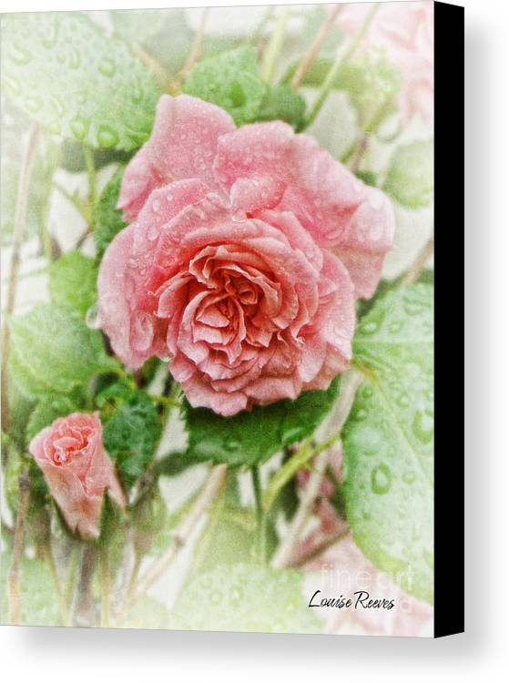Rose Canvas Print featuring the photograph Mother And Child 2 by Louise Reeves