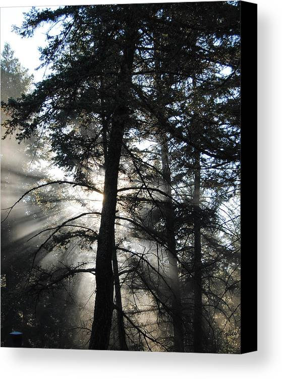 Landscape Canvas Print featuring the photograph Northwoods Morning by Vallee Johnson