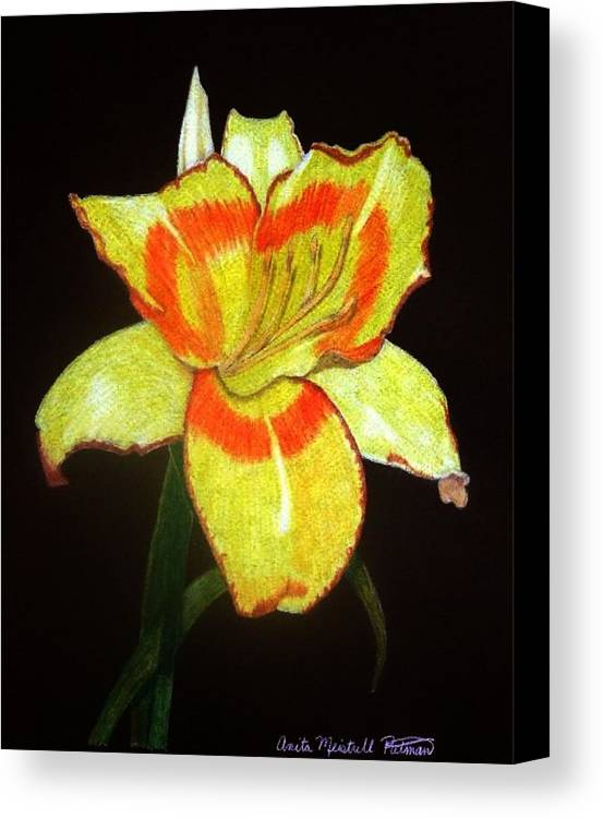 Daylily Canvas Print featuring the drawing Orange Glow by Anita Putman