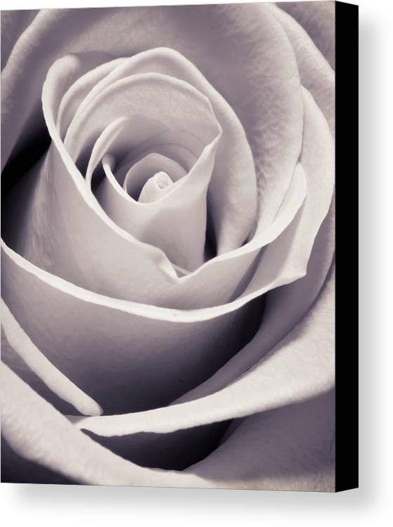 3scape Photos Canvas Print featuring the photograph Rose by Adam Romanowicz