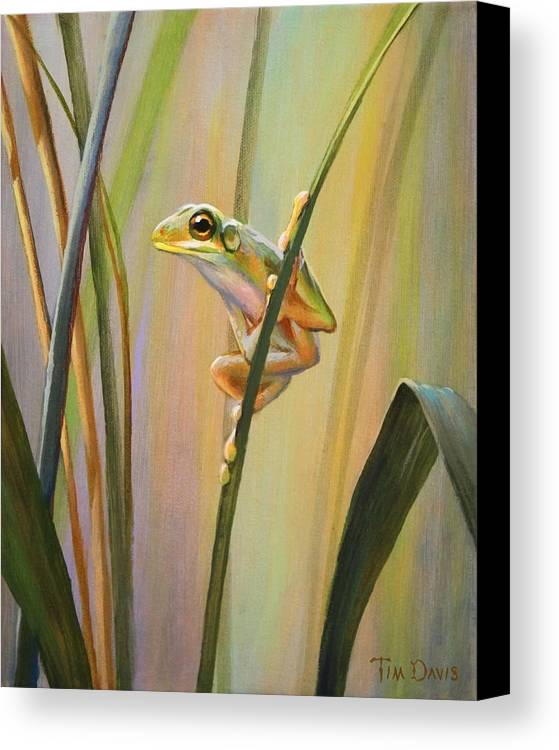 Spring Canvas Print featuring the painting Spring Peeper by Tim Davis