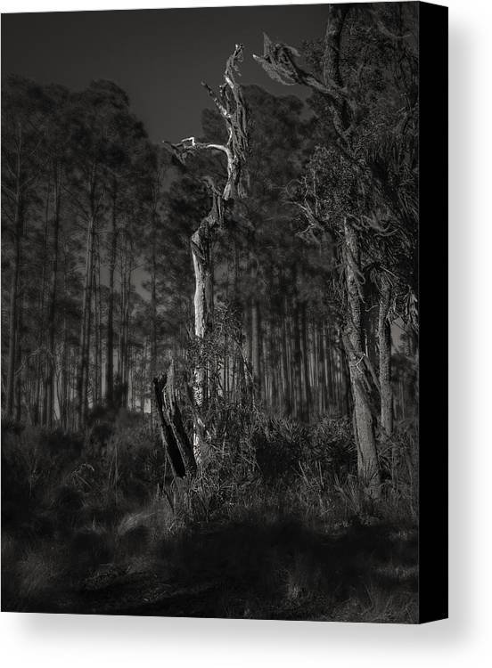 Black And White Canvas Print featuring the photograph Still Standing by Mario Celzner