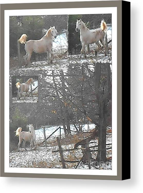 Horse Photography Canvas Print featuring the photograph The Stallion Lives In The Country by Patricia Keller