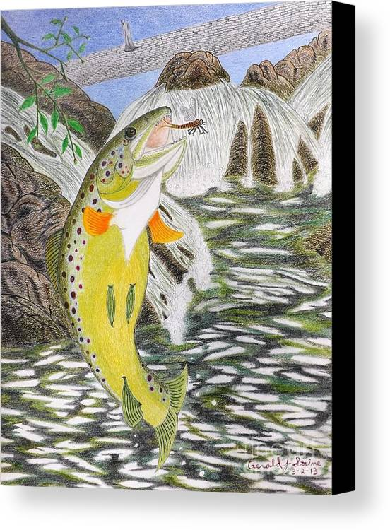 Trout Stream Canvas Print featuring the drawing Trout Stream In May by Gerald Strine