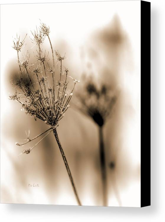 Flowers Canvas Print featuring the photograph Winter Flowers II by Bob Orsillo