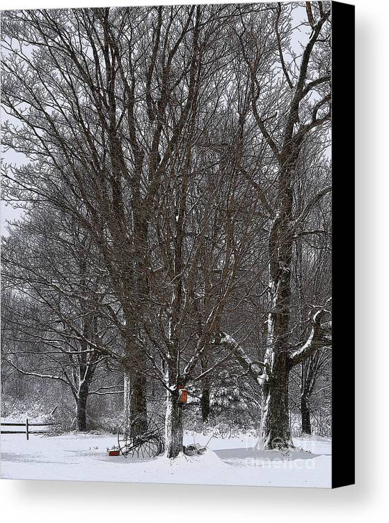 Diane Berry Canvas Print featuring the drawing Winter Shadows by Diane E Berry