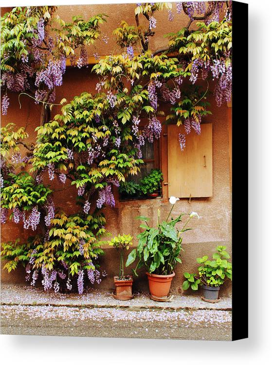 Wisteria Canvas Print featuring the photograph Wisteria On Home In Zellenberg 4 by Greg Matchick